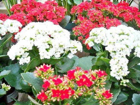 які квіти цвітуть восени