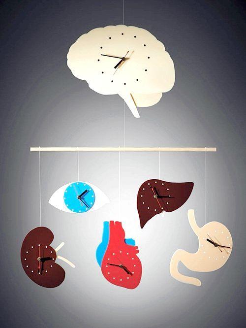 біологічний годинник органів
