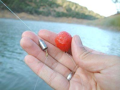ловля риби на бойли