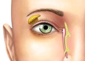 хвороби очей у людей