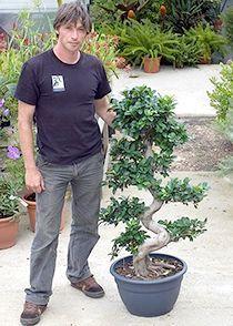 рослина заміокулькас