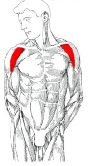 тренування дельтоподібних м'язів