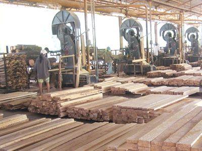 розвиток деревообробної промисловості