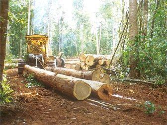 лісова і деревообробна промисловість