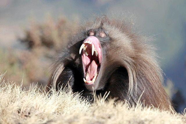 африканські тварини фото