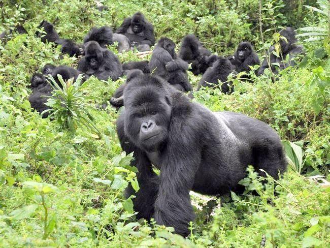 дикі африканські тварини