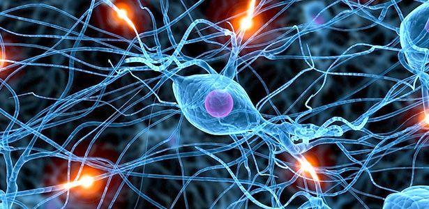 головний мозок передній мозок