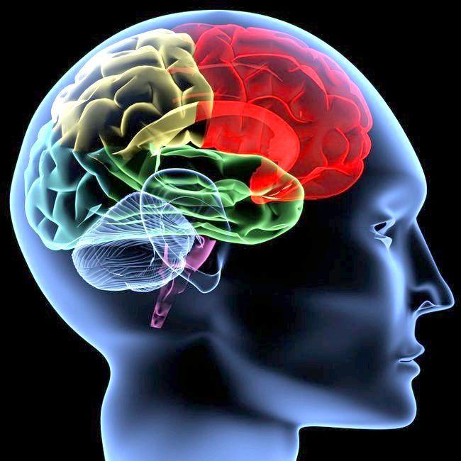 відділи переднього мозку