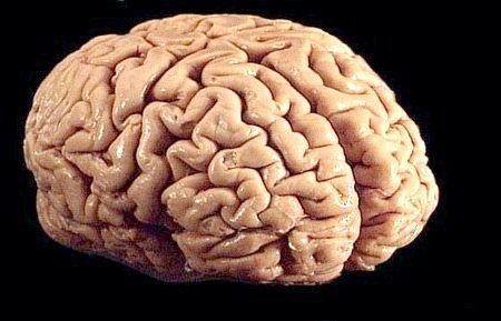Головний мозок людини