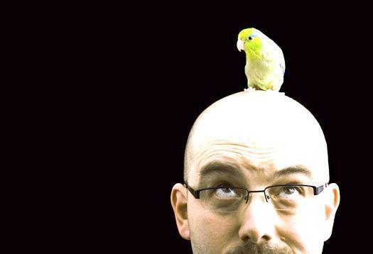 головний мозок птахів