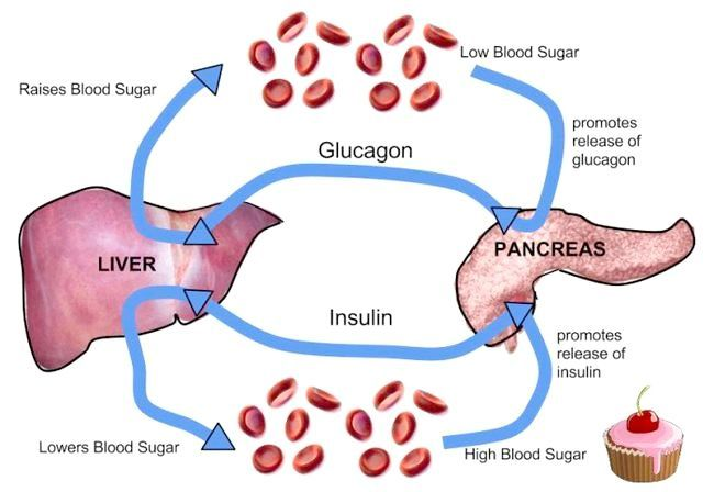 функції підшлункової залози