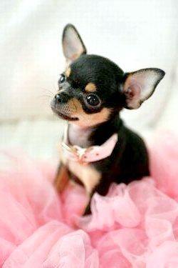 Імена для собаки-дівчинки і собаки-хлопчика