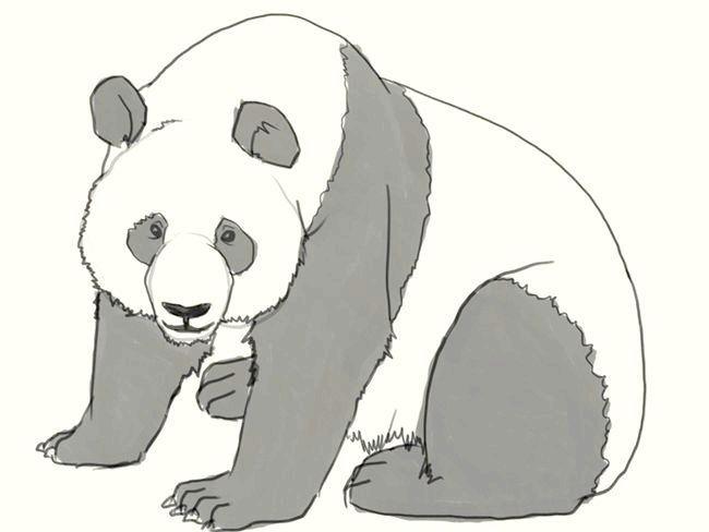як намалювати панду поетапно