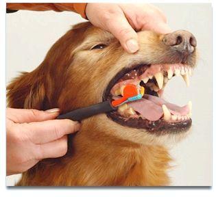 чистка зубів собакам ультразвуком