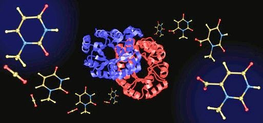 метилурацил таблетки