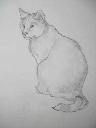 Як намалювати кота красиво
