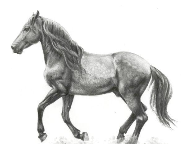 Як намалювати коня: зможе кожен!