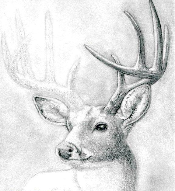 як намалювати оленя поетапно олівцем