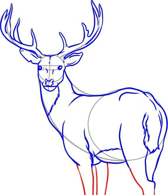 як намалювати оленя олівцем