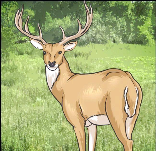 як намалювати оленя поетапно