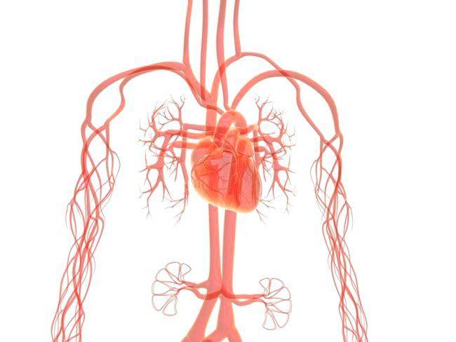 як зміцнити серце і судини