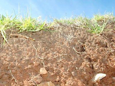 Які бувають групи ґрунтів