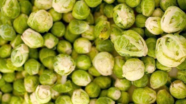 брюссельська капуста вирощування
