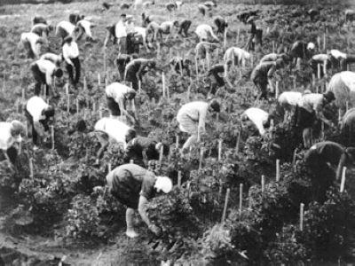 Колектівізація сільського господарства: на шляху до «комуністічному раю»
