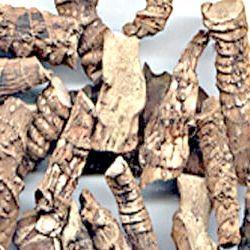 корінь аїру для зубів