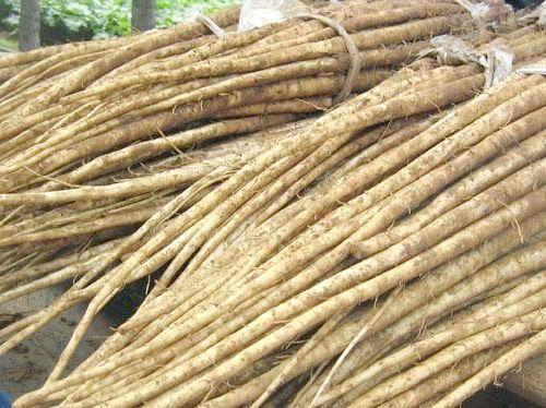 корінь лопуха
