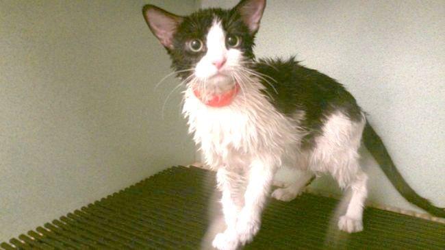 шкірні захворювання у кішок в картинках