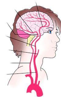 порушення кровопостачання головного мозку