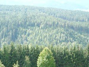 лісова промисловість