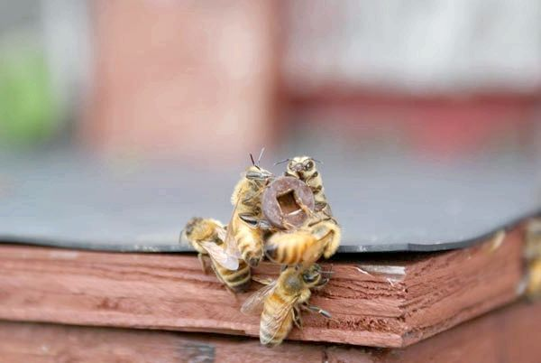 виготовлення пасток для бджіл
