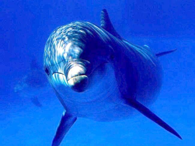 дельфін тварина