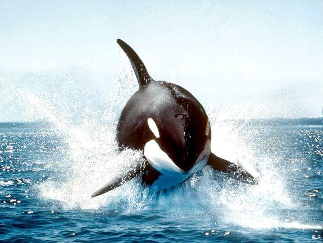 небезпечні морські тварини