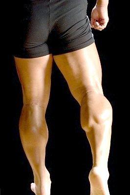 М'язи ніг