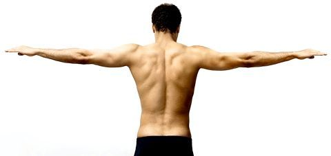 м'язи плечового пояса