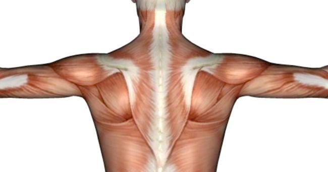 м'язи шиї і плечового пояса