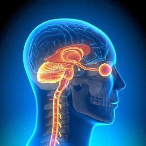 нервова тканина утворює