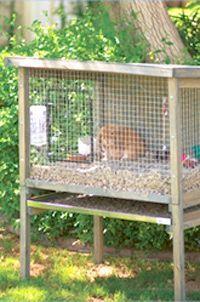розміри кліток для утримання кролів