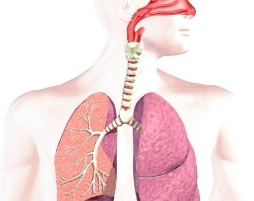 Органи дихання тварин