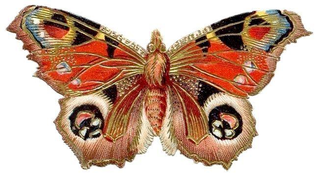 Осьова симетрія в живій і неживій природі