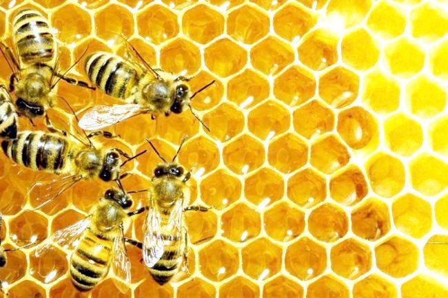 продукти бджільництва і їх користь