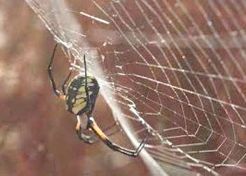 Чому не можна вбивати павуків - міф чи реальність?