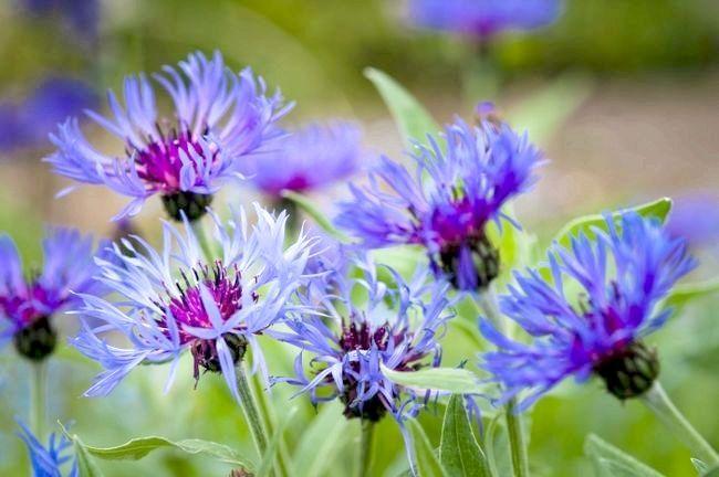 Польовий квітка. Чарівність живої природи