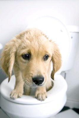ніж лікувати пронос у собаки