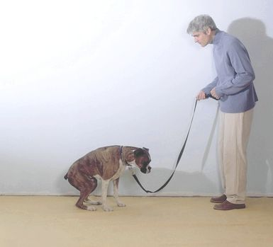 кривавий пронос у собаки