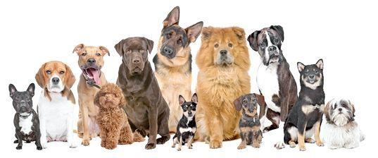 клички для собак хлопчиків