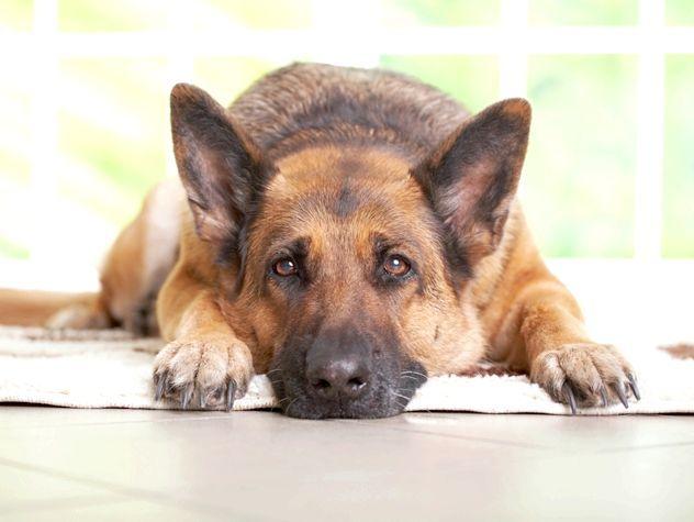 красиві клички для собак хлопчиків